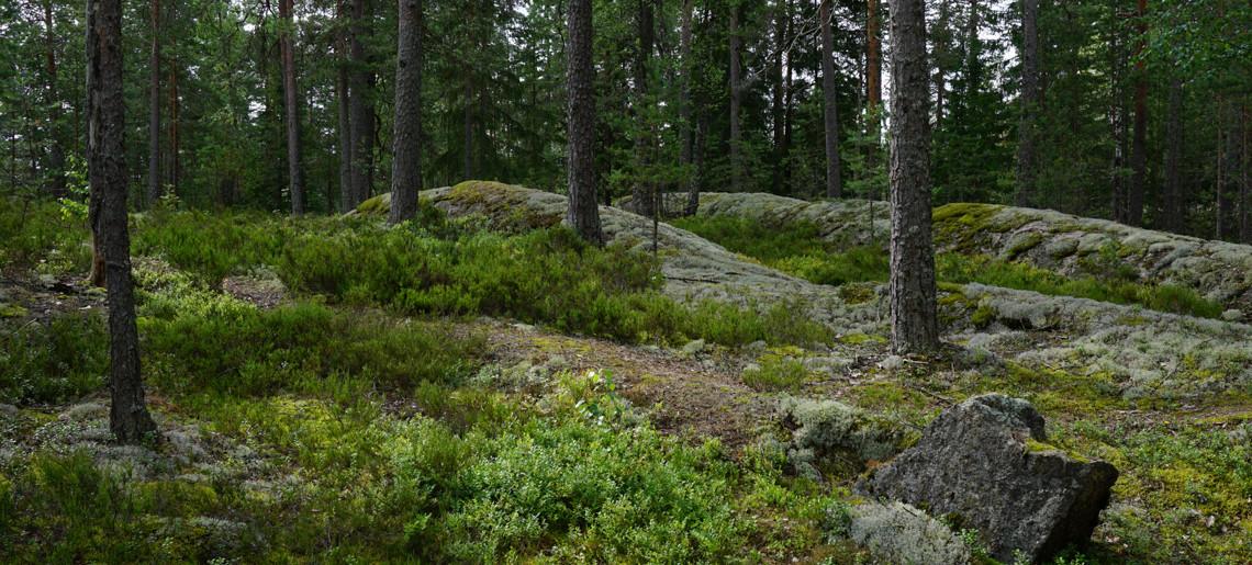 Wszystkie drogi prowadzą do lasu…
