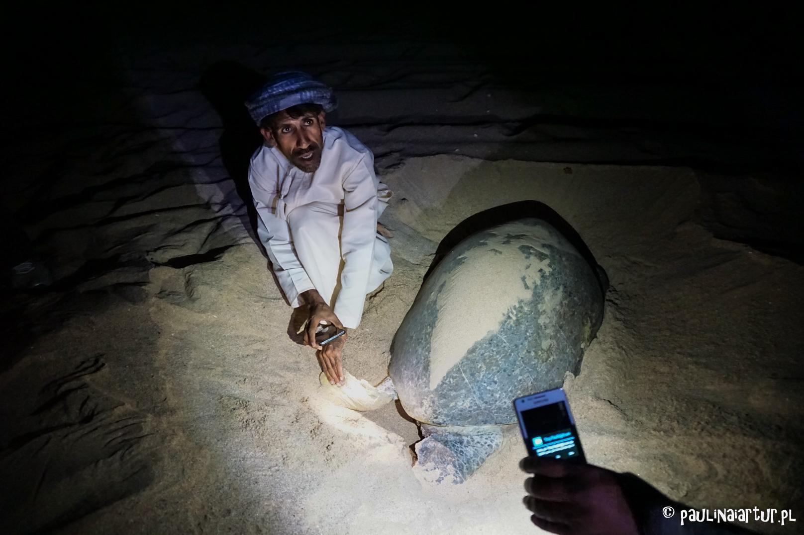Składanie żółwich jaj w Ras Al Had